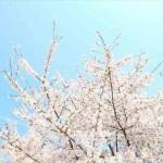春に抜け毛が増える原因はコレ!予防と対策で守っていく方法!