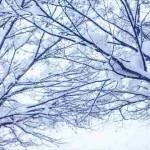 冬に抜け毛や薄毛が増える3つの原因!寒さが頭皮トラブルに!