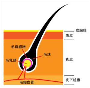 touhisikumi27-1